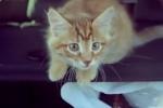 Обманутые дольщики признались, что не запускали котенка в стратосферу