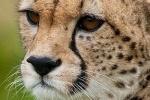 В подмосковном цирке гепард набросился на семилетнего ребенка