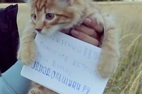 Обманутые дольщики запустили в космос живого котенка с письмом Путину (Кадры)