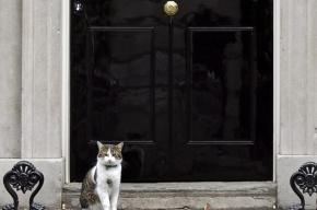 Полиции пришлось разнимать дерущихся котов премьера и главы Минфина