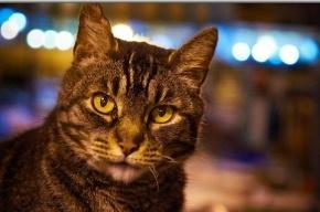 Госдума хочет ввести лимит на число кошек и собак в одной квартире
