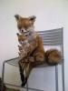 Упоротая лиса, фотожабы: Фоторепортаж
