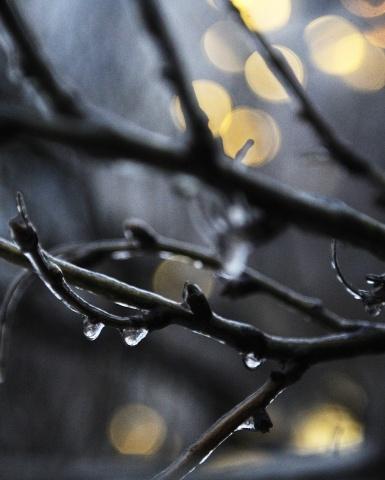 Ледяной дождь Москва 30 ноября 2012 (2): Фото