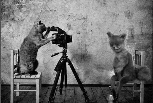 Упоротая лиса, фотожабы: Фото