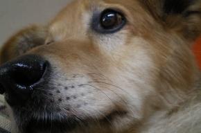 Догхантеры устроят массовую травлю собак в Петербурге