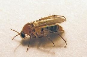 На таможне в Петербурге задержали 2,5 кг сухих насекомых