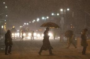 Снегопад в Петербурге: шторм валит деревья и срывает кровлю