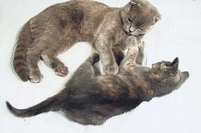 Наши кошки