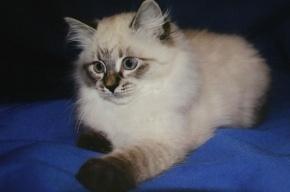 Медведев подарит экс-президенту Финляндии котенка