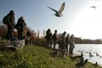 Царское Село, птицы: Фоторепортаж