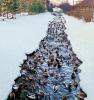 Утки, Петергоф: Фоторепортаж