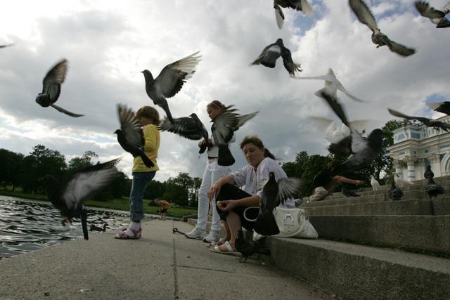 Царское Село, птицы: Фото