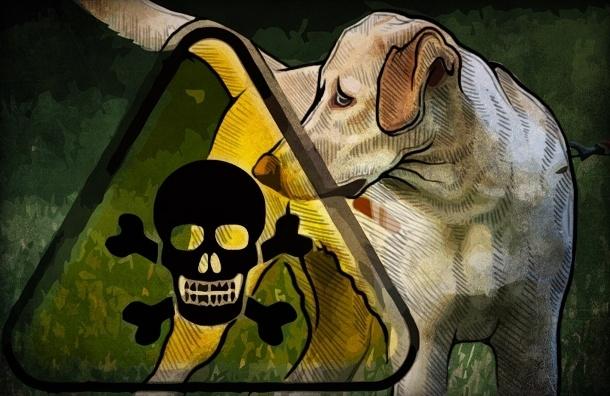 Собак в Петербурге травят опасным для человека ядом