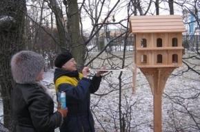 В парках Царского Села появились исторические птичьи кормушки