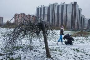Из центра Петербурга жителей будут переселять в Сосновую Поляну и Кронштадт