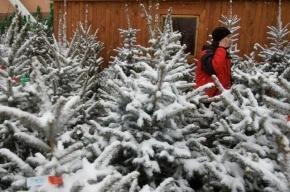В Петербурге открываются елочные базары: все адреса, время работы