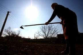 Прокуратура нашла в Ленобласти махинации с земельными участками