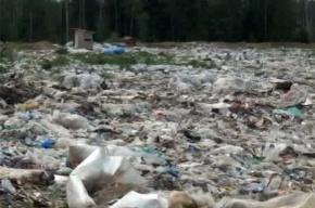 Ущерб от незаконной свалки Минобороны составил 380 млн рублей