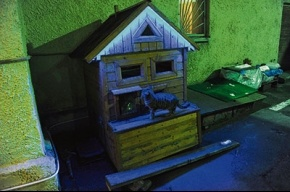 Для бездомных кошек построили трехэтажный дом