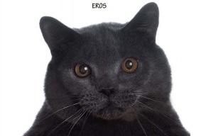 Россиянин купил в газете некролог для кота за 30 тысяч евро