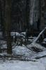 Вырубка сквера Сосновая Поляна улица Пограничника Гарькавого: Фоторепортаж