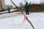 вырубка деревьев у кинотеатра Спутник: Фоторепортаж