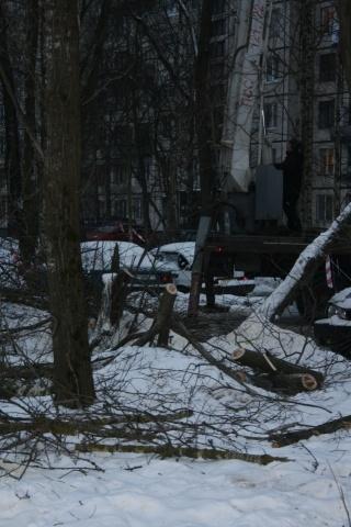 Вырубка сквера Сосновая Поляна улица Пограничника Гарькавого: Фото