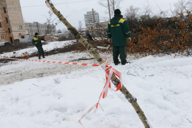 вырубка деревьев у кинотеатра Спутник: Фото