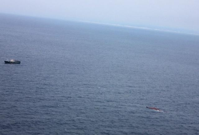 Поиски моряков с затонувшего судна Шанс-101 в Японском море: Фото