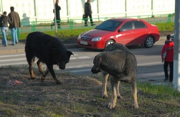 Московские догхантеры готовят новый рейд по уничтожению бродячих собак