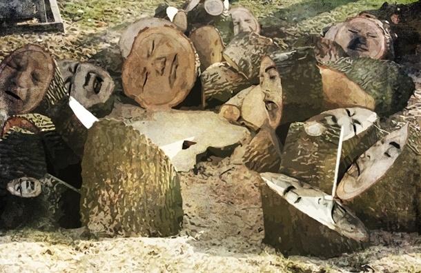Депутаты Петербурга наплевали на мнение избирателей: закон, охраняющий лесопарки, не принят