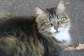 Петербуржцы спасают кошек от работников ТСЖ и кэтхантеров