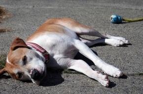 В Купчино догхантеры начали массовую травлю собак и детей