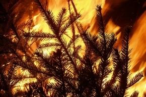 В Колпино мужчина убил и сжег подругу на Новый год