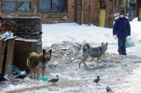Стая бездомных собак напала на шестилетнего мальчика