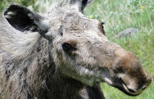 Названия партий в бюллетенях предлагают ассоциировать с животными