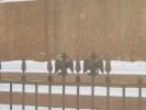 Орлы на ограде решетки: Фоторепортаж