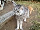 Самый длинный кот в мире скончался в Неваде: Фоторепортаж
