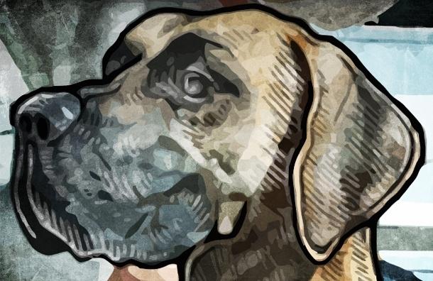 Борцы с экскрементами предложили закрыть Петербург для собак