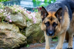 Суд прекратил уголовное дело против петербуржца, по вине которого собака убила младенца