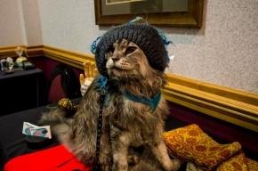 Самый длинный кот в мире скончался в Неваде