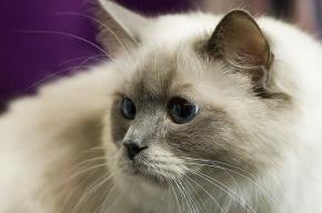 В Петербурге будут судить садиста, который перерезал горло коту