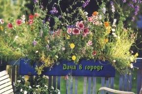 «Дача в городе» бесплатно научит петербуржцев украшать дворы цветниками и клумбами