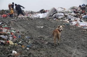 Петербургский чиновник арестован в рамках «мусорного» дела
