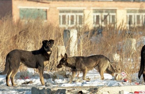 За жестокое обращение с животными предлагают сажать на три года