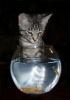 Коты: Фоторепортаж