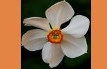 Модные цветы сезона весна 2013: Фоторепортаж
