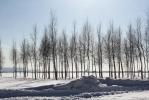 Деревья и газоны: Фоторепортаж