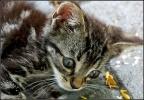 Фоторепортаж: «Коты»
