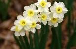 Фоторепортаж: «Модные цветы сезона весна 2013»